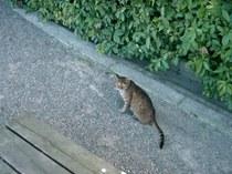 猫@京都御所